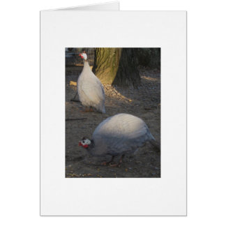 A Pair Of Coral Blue Guineas Card