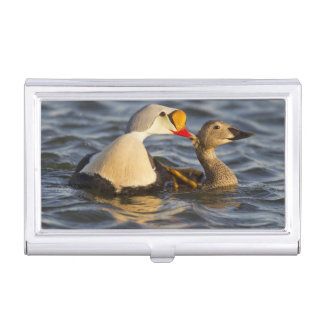 A pair of courting king eiders in a tundra pond business card holders