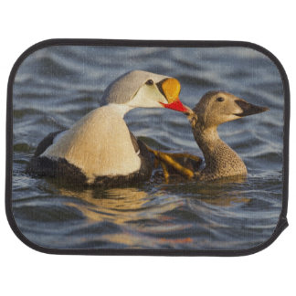 A pair of courting king eiders in a tundra pond car floor carpet