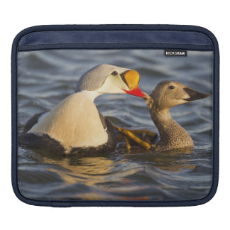 A pair of courting king eiders in a tundra pond sleeves for iPads