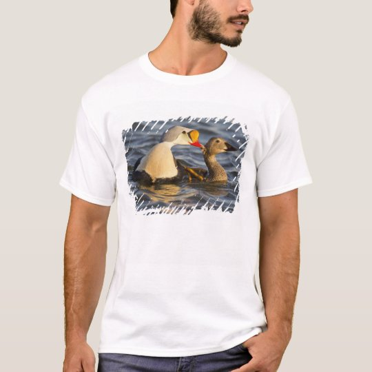 A pair of courting king eiders in a tundra pond T-Shirt