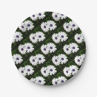 A Pair of Pristine White African Daisies 7 Inch Paper Plate