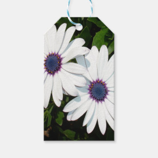 A Pair of Pristine White African Daisies Gift Tags