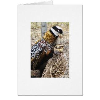 A Pair Of Reeves Pheasants Card