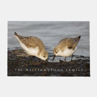 A Pair of Sanderlings Shares Doormat