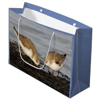A Pair of Sanderlings Shares Large Gift Bag