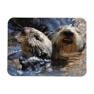 A Pair of Sea Otters Magnet