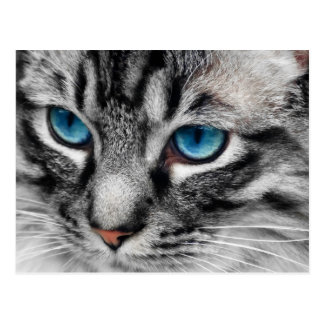 A-PAL - Silver Tabby Cat with Blue Eyes Close Up Postcard