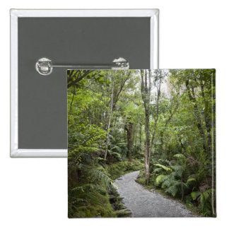 A path through a rain forest at the base of 2 inch square button