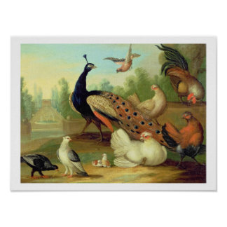 A Peacock, Doves, Chickens and a Jay in a Park Poster