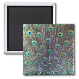 A Peacock's Trance - Square Magnet