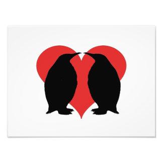A Penguin Couple Photo