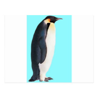 A Penguin on blue!  A Fun Gift for Anyone! Postcard