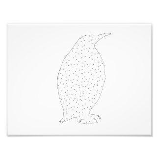 A Penguin Photographic Print