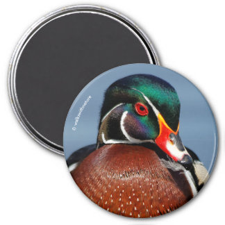 A Pensive Wood Duck Drake 3 Inch Round Magnet