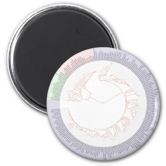 A phylogenetic tree of life Chart 2 Inch Round Magnet