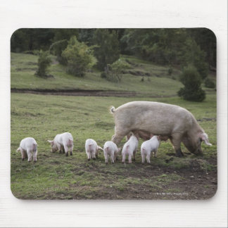 A pig with piglets in a field mouse pad