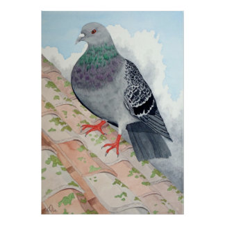 A Pigeon rests on a roof Poster