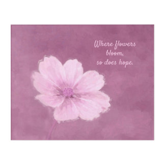 A Pink Cosmos Flower on a Pink Background Acrylic Print