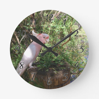 A Pink Major Mitchell's cockatoo on a barrel Clock