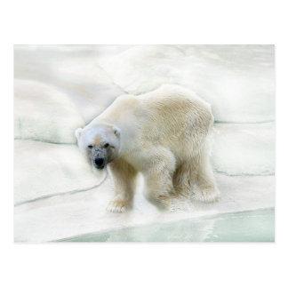 A polar bears icy cold postcard
