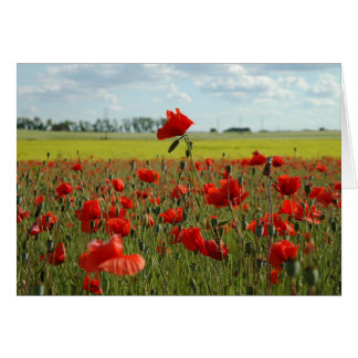 A Poppy Above the Rest Card