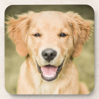 A Portrait Of A Golden Retriever Puppy Beverage Coaster