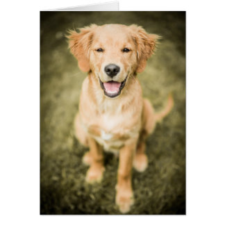 A Portrait Of A Golden Retriever Puppy Card