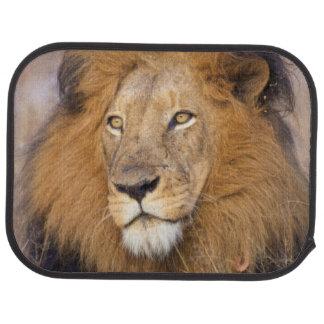 A portrait of a Lion looking into the distance Auto Mat