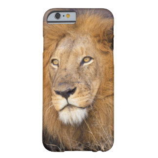 A portrait of a Lion looking into the distance Barely There iPhone 6 Case