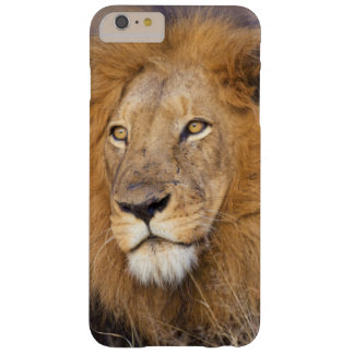 A portrait of a Lion looking into the distance Barely There iPhone 6 Plus Case