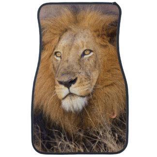 A portrait of a Lion looking into the distance Car Carpet