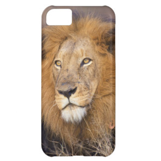 A portrait of a Lion looking into the distance iPhone 5C Cover