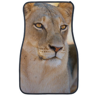 A portrait of a Lioness looking into the distance Floor Mat
