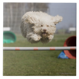 A Portuguese Waterdog jumping over a hurdle Ceramic Tiles
