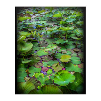 A pretty pond full of lily pads at a water temple acrylic wall art