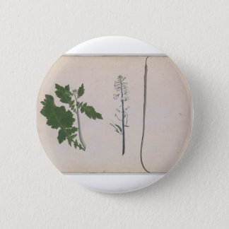 A Radish Plant, Seed, and Flower 2 Inch Round Button