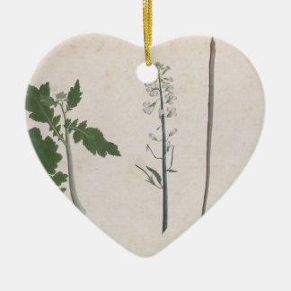 A Radish Plant, Seed, and Flower Ceramic Ornament
