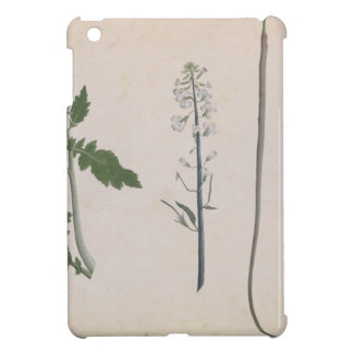 A Radish Plant, Seed, and Flower Cover For The iPad Mini