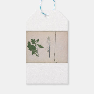 A Radish Plant, Seed, and Flower Gift Tags