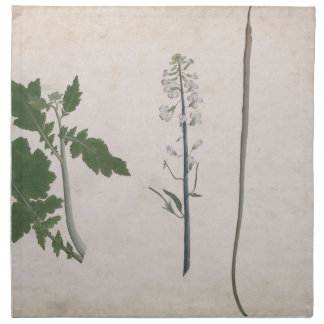 A Radish Plant, Seed, and Flower Napkin