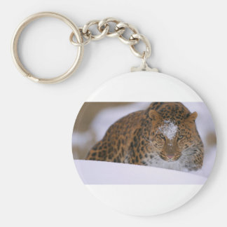 A Rare Amur Leopard Peers Over a Snowy Embankment. Basic Round Button Keychain