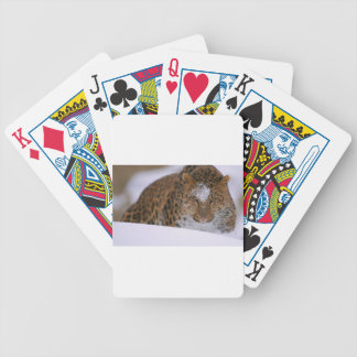 A Rare Amur Leopard Peers Over a Snowy Embankment. Bicycle Playing Cards