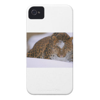 A Rare Amur Leopard Peers Over a Snowy Embankment. Case-Mate iPhone 4 Cases