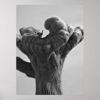 A Rare Saguaro Cactus Poster