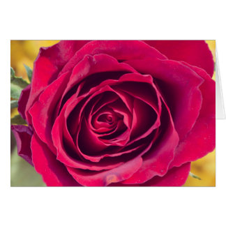A red rose card