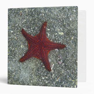 A Red Starfish   Galapagos, Equador Binder