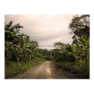 A remote jungle road postcard