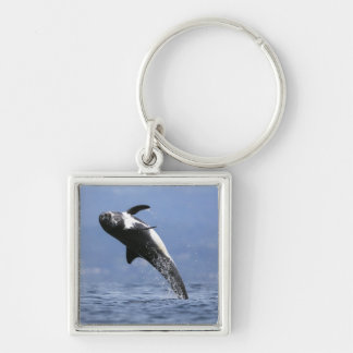 A Risso Dolphin Keychain