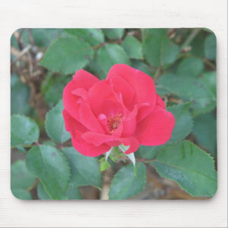 A Rose By Any Other Name Mouse Pad